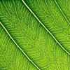 leaf_1_bg_010503